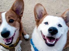 A kutyák könyörgő tekintete