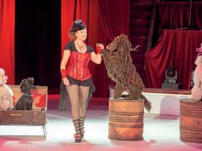 Játék és megfigyelés: Uszkár show a cirkuszban