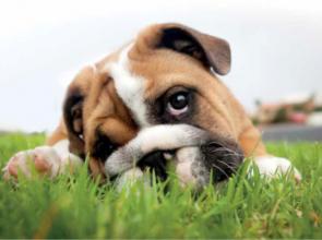 Mese a kutyák teremtéséről
