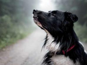 A kutyák megérzik, ha félünk!